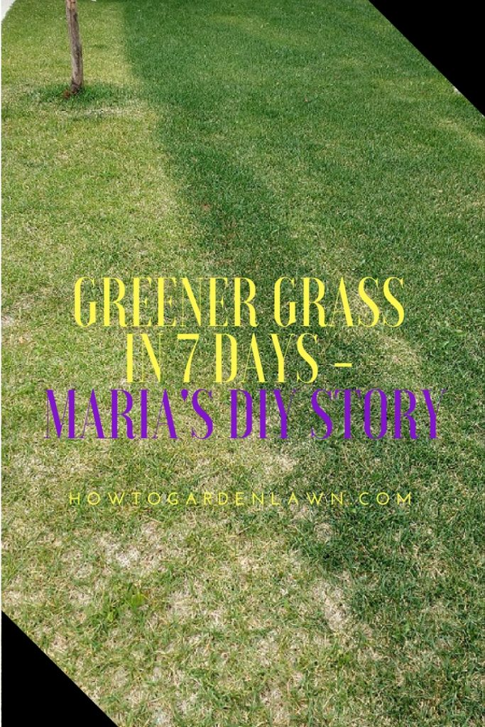 Greener grass in 7 days - easy DIY how to story from Maria
