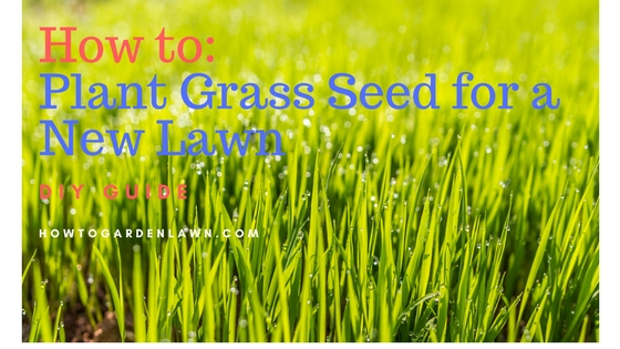 How to kill entire lawn and all weeds for a new lawn (fresh start) - DIY Guide