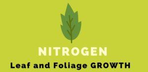Nitrogen in fertilizer helps leaf and foliage growth